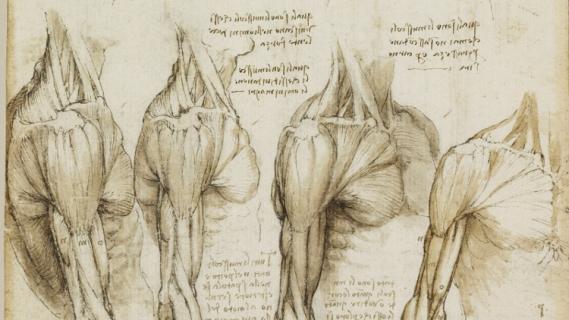 Resenha Tess leonardo-da-vinci-human-anatomy-drawings-wallpapers-12