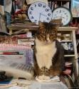 Tigra, a gata livreira.